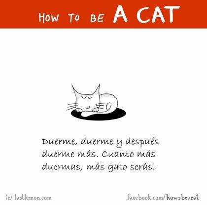 La guía definitiva que querrás tener, si lo que quieres es saber cómo ser un gato