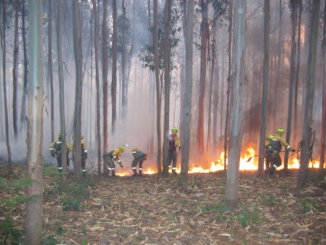 Extinción de un incendio forestal por una BRIF