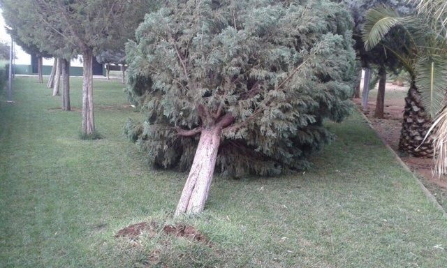 El viento derriba árboles en Montijo