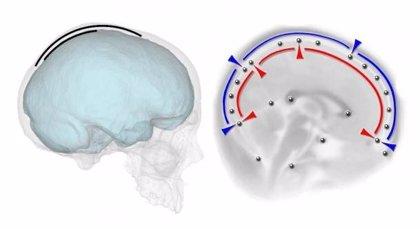 El cráneo humano, moldeado por la forma del cerebro