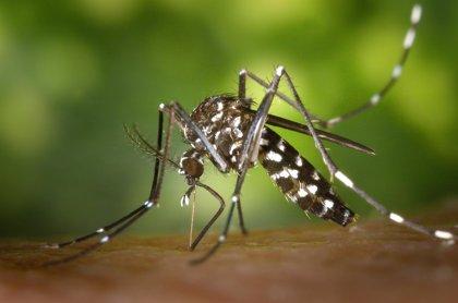 Una 'app' para avisar de la presencia del mosquito tigre en Barcelona