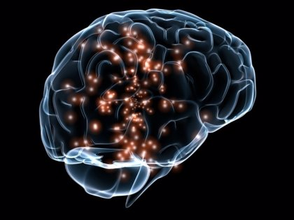 Investigadores españoles descubren mecanismos cerebrales que reconocen la identidad social