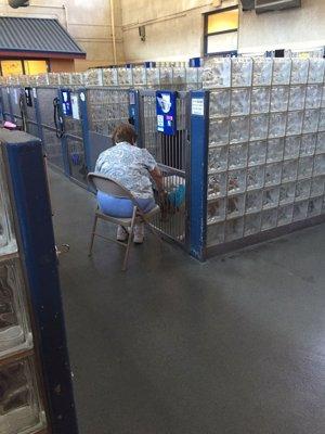 Esta mujer lee diariamente un libro a los perros de un refugio para paliar su so