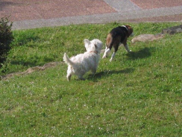 Perros En Un Parque En Santander