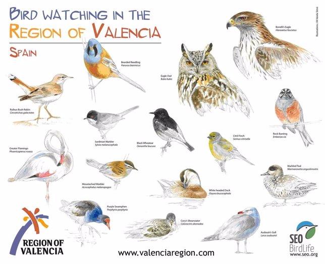 Cartel promocional del turismo ornitológico en la Comunitat