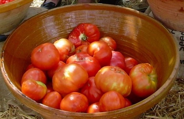 Tomates rosa de la Sierra de Huelva.