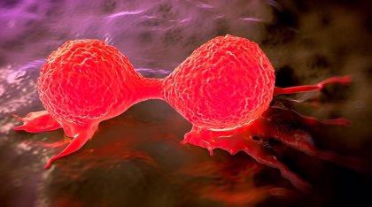 Tejidos cancerígenos implantados en ratones 'retraen' tumores de páncreas y mama