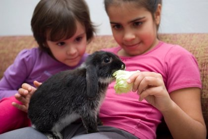Claves para cuidar animales exóticos en casa