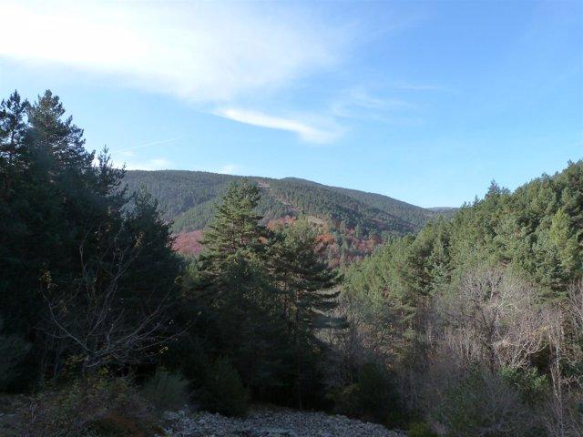 Sierra de Cebollera.