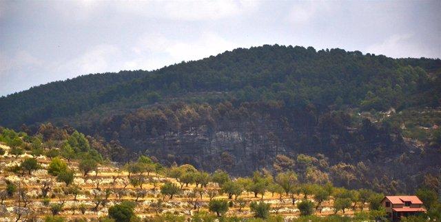 Zona afectada por el incendio de Torremanzanas