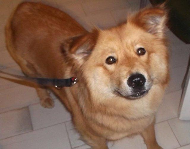 Uno de los perros susceptibles de adopción del Centro de Atención de Animales