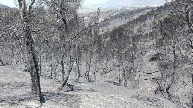 Estado de la zona afectada por el incendio de Quesada