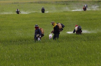 La exposición a pesticidas podría aumentar el riesgo de diabetes
