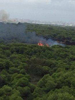 Incendio en El Saler (Valencia).