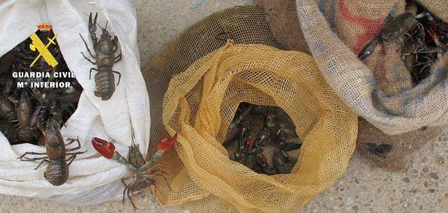 Imagen de los cangrejos capturados