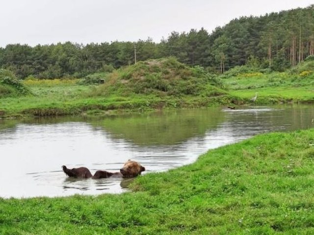 Santuari Libearty Bear (Rumania)