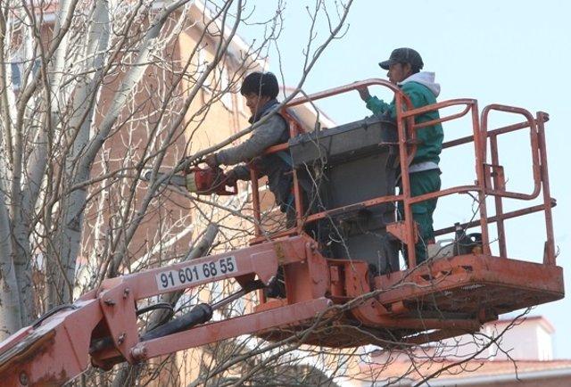 Unos trabajadores extranjeros en su jornada laboral