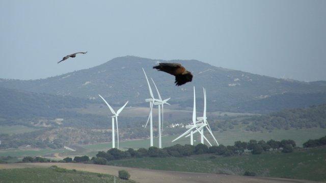 Aves mueren por parques eólicos buitres leonados Guadalteba
