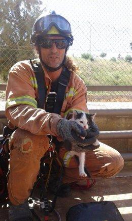 Un bombero sujeta al gato rescatado este sábado