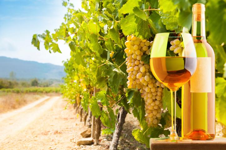 La ruta vinícola de las 5 denominaciones