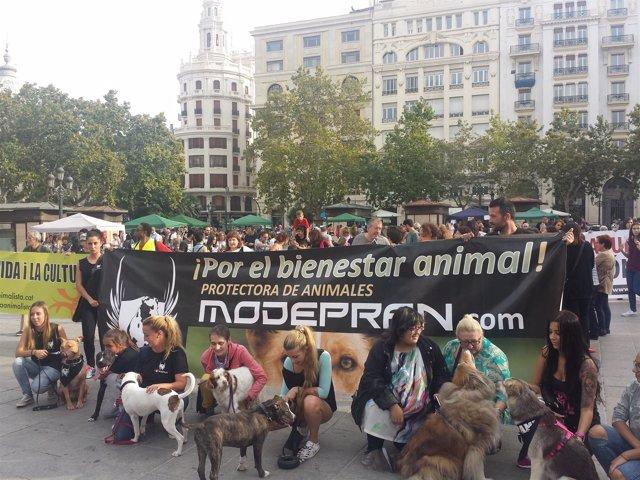 """Manifestación """"por el cambio también para los animales"""" en Valencia"""