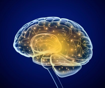 El glutamato 'alimenta' el cerebro