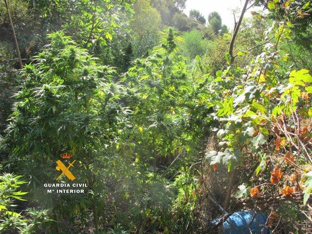 Marihuana encontrada en Estepona