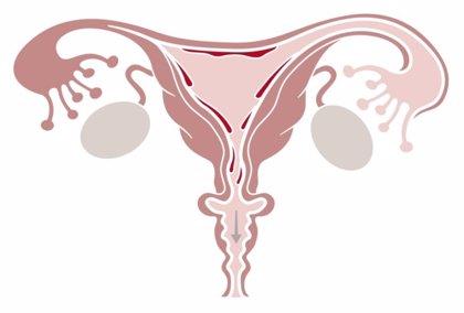 Los trasplantes de ovarios parecen ser seguros y eficaces