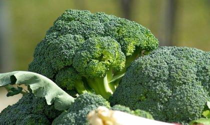 Tratamientos para la leucemia linfática crónica a partir del brócoli