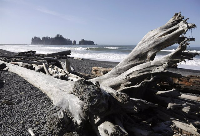 Washed up tree trunks are pictured along the waters of the Pacific Ocean at Olym