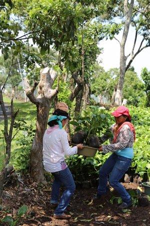 proyecto El Salvador