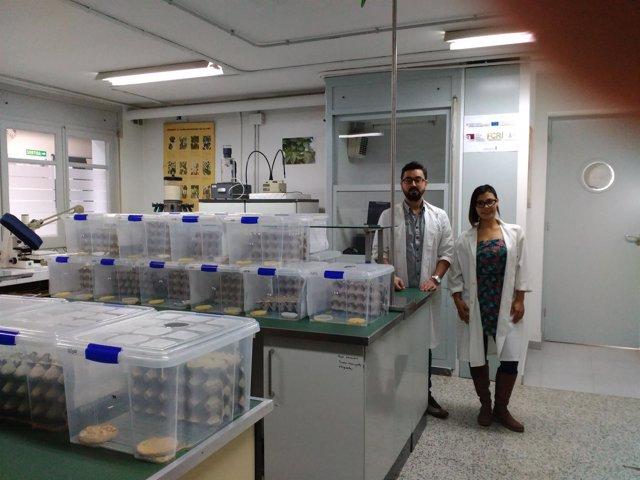 La universitat de lleida cr a grillos para el consumo humano for Cria de peces para consumo humano