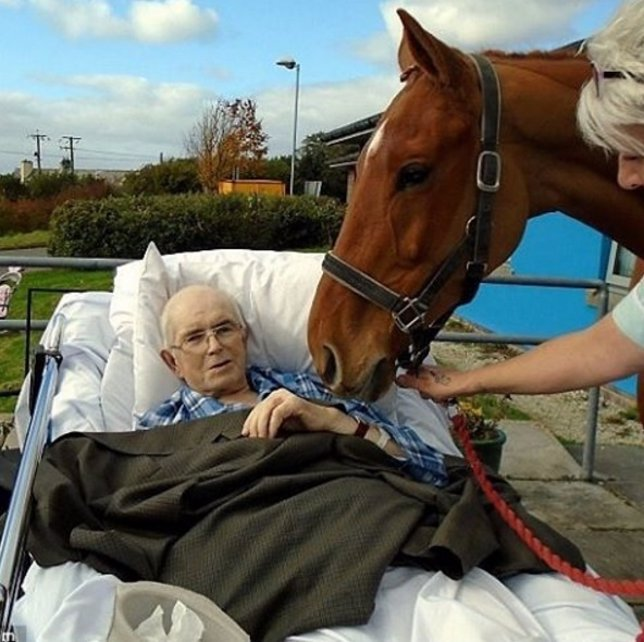 Un caballo dice el último adiós a su dueño moribundo en un hospital