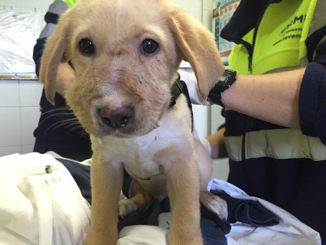 Robin, cachorro abandonado en un contenedor en Hortaleza