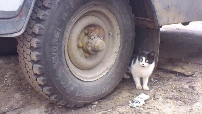 Tom y Jerry: El juego del gato y el ratón versión rusa en vídeo