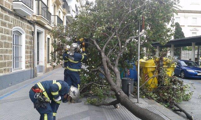 Retirada de árbol en Cádiz