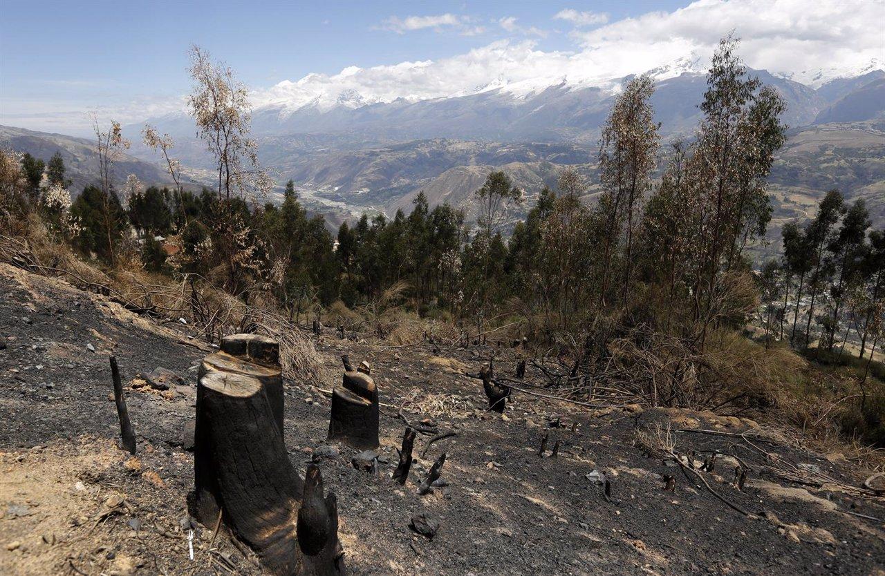 Deforestación perú amazonas