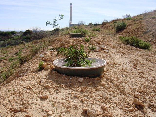 Reforestación de la escombrera de Endesa en Carboneras