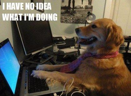 El divertido álbum de fotos del perro que no sabe lo que está haciendo (meme)