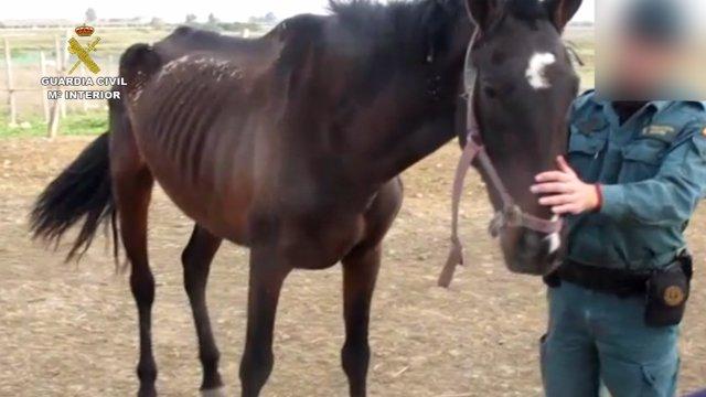 Imputado un hombre en Huelva por maltrato a un caballo