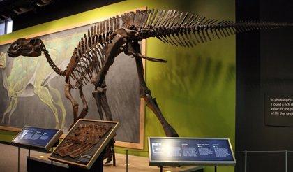 Hallan vasos sanguíneos en el fósil de un dinosaurio de hace 80 millones de años