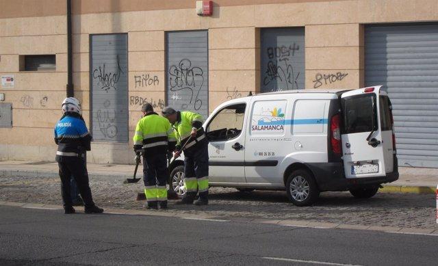 Operarios del Servicio Municipal de Limpieza de Salamanca.