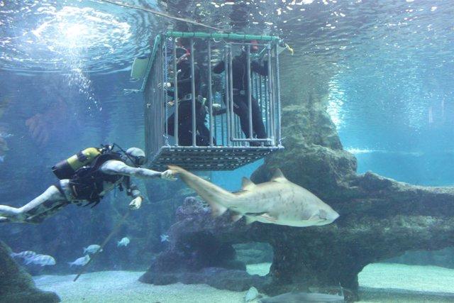 Jaula de inmersión del Aquarium