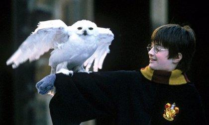 Harry Potter: Nueva (y esperanzadora) teoría sobre la muerte de Hedwig
