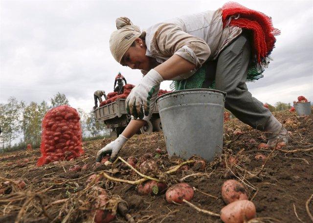 Trabajadora migrante en Uzbekistán