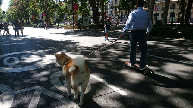 Un vecino con su perro en el Paseo del Prado