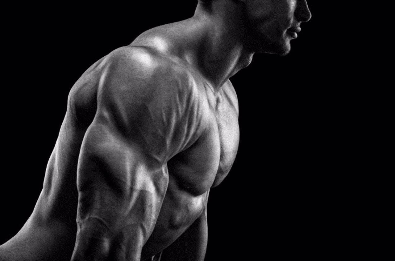 Ftness training, músculo