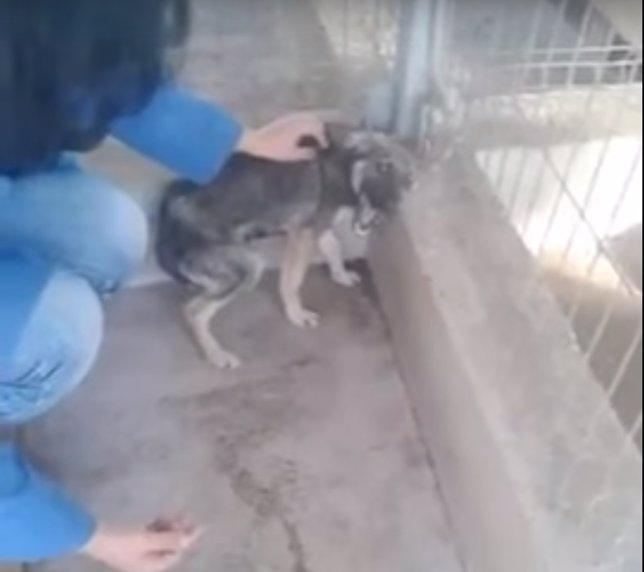 Cachorro acariciado por primera vez tras ser maltratado