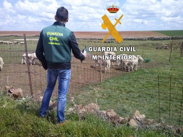 Imagen facilitada por la Guardia Civil sobre el robo de las ovejas