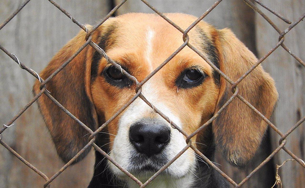 Perro, animal, jaula, mamífero, amigo, perrera